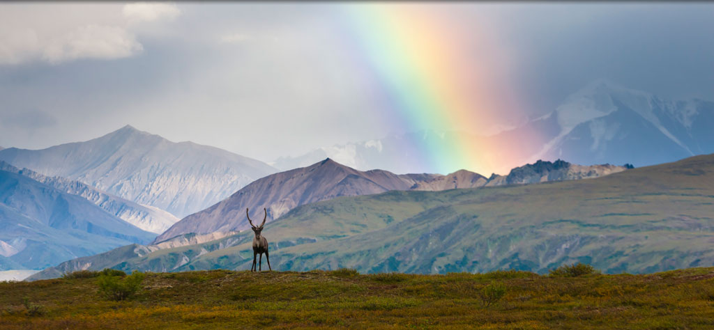 10 Wild Adventures You Can Experience in Alaska