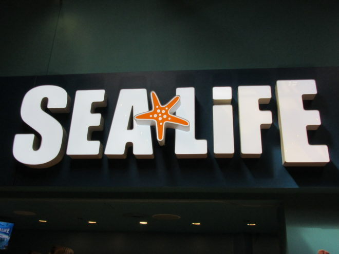 Sea Life Aquarium Michigan ©WagonPilot