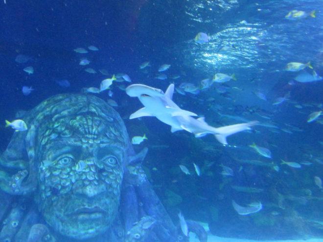 Hammerhead Shark ©WagonPilot