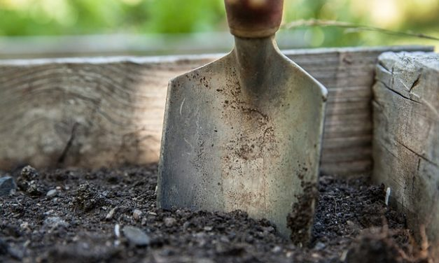 How To Care For the Soil In An Organic Garden