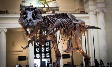 5 Fun Chicago Attractions the Whole Family will Enjoy