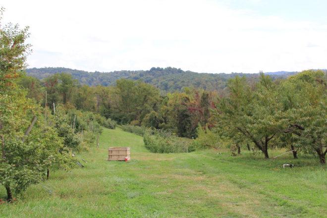 hidden-hills-orchard