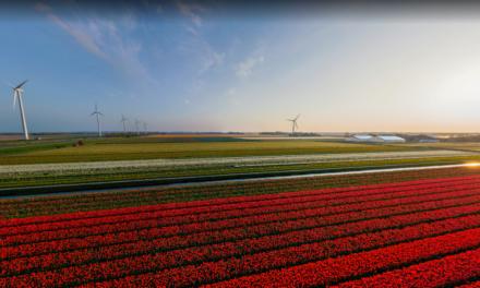Virtual Excursion: Holland Tulip Farms