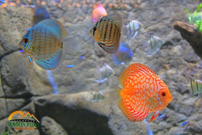 Belle Isle Aquarium ©Wagon Pilot Adventures