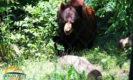 Visiting Exotic Species at Indiana's Black Pine Animal Sanctuary