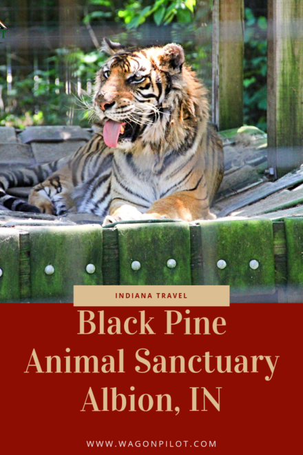 Black Pine Animal Sanctuary © Wagon Pilot Adventures