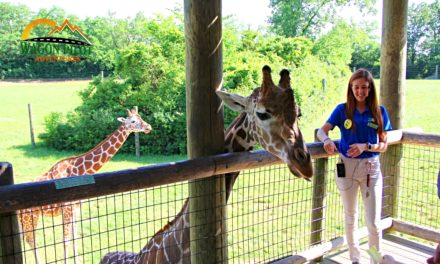 10 Fun and Unique Things to do at the Fort Wayne Children's Zoo