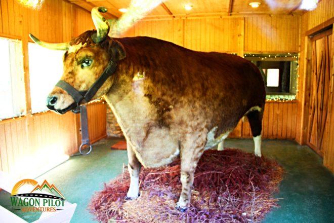 Old Ben, the world's largest steer -  Kokomo, Indiana © Wagon Pilot Adventures